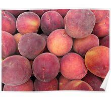 Prunus persica... Poster