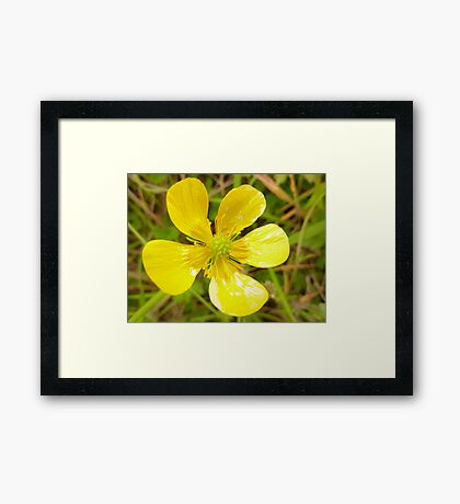 Mellow yellow in Donegal Framed Print