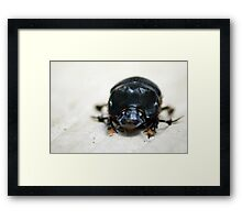 Dung Beetle - Costa Rica Framed Print