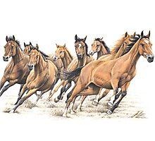 Trakehner Horses Photographic Print