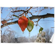 AUTUMN LEAVES IN ICE Poster