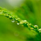 Drops of Green by Christopher Gaines