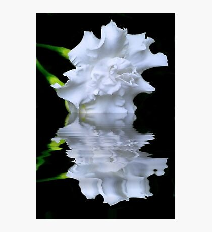 Dipped White Photographic Print