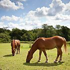 Suffolk Punch Horses by Imaginato