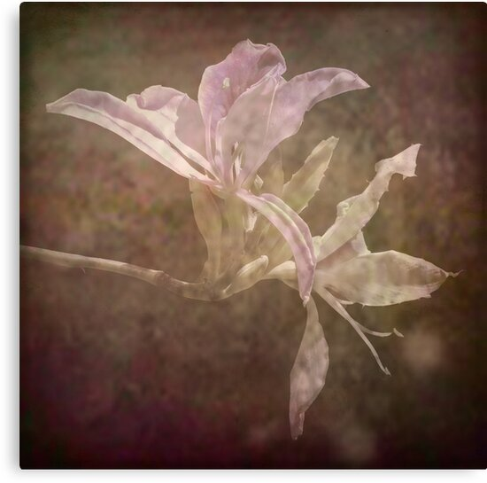 Flower by Lucinda Walter