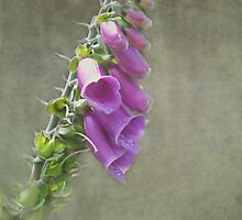 The Foxglove by Smudgers Art