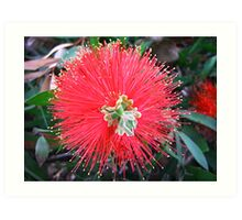 Red Explosion Art Print