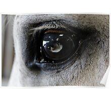 Eye of the blind  Poster