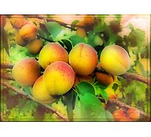 In the apricots kingdom Photographic Print