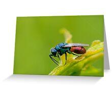 Gold wasp Greeting Card