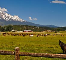 Shasta and Horses by Bob Moore