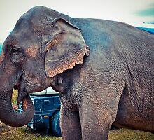 Elephant by lalylaura