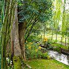 Monet's Garden - Giverny by Anna Sobert