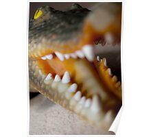 Mr Crocodile Poster