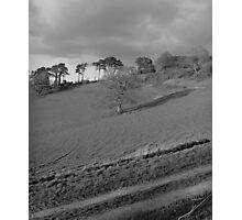 Tree in Newton Abbot Photographic Print