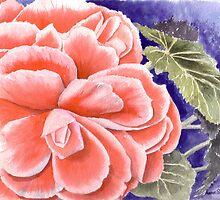 Pink Begonia by Anne Sainz
