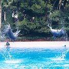 Flying Dolphins, Mirage Hotel, Las Vegas, Nevada by lenspiro