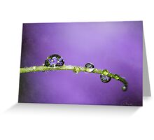 Dreaming of Violets Greeting Card