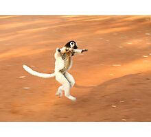 Dancing Verreaux's Sifaka Photographic Print