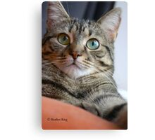 You Have My Attention Canvas Print