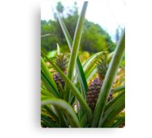 Pineapples Canvas Print