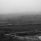 Fence Among Fog by David Spector