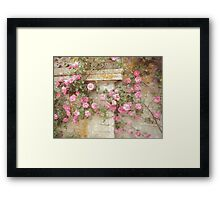 Watercolor Pink Climbing Roses Framed Print