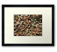 Top view of the green and brown fallen leaves of maple and chestnut Framed Print