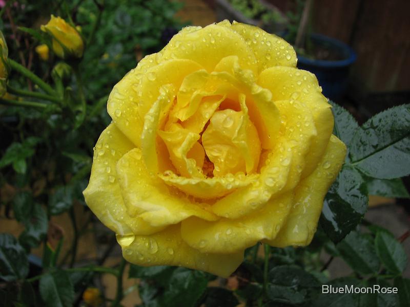 Decked with Diamonds - Pretty Yellow Minirose by BlueMoonRose