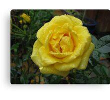 Decked with Diamonds - Pretty Yellow Minirose Canvas Print