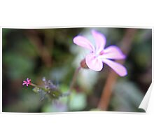 Pink will flowers Poster