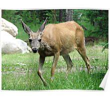 Bambi in Jasper Poster