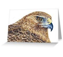 Harrier Hawk Head 2011 Greeting Card