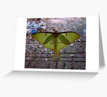 """Luna Moth on Screen Door"" Greeting Card"