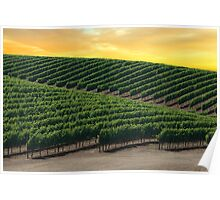 Golden Skies Over Napa Valley (California) Poster