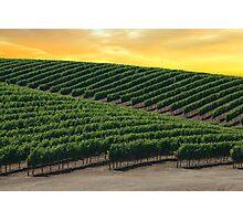 Golden Skies Over Napa Valley (California) Photographic Print