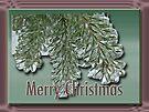 Merry Christmas Arborvitae by MotherNature