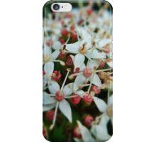Garden flowers in bloom iPhone Case/Skin