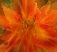 Quatros in Orange Abstract by Debbie Robbins