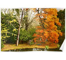 Willow in Autumn colors Poster