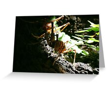 New Zealand Cave Weta 02 Greeting Card