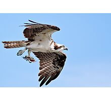 Osprey with dinner Photographic Print