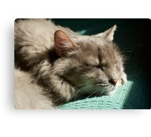 Grey Cat - Sleeping in Sunlight  Canvas Print