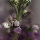 Stock in Pastels by Dianne English