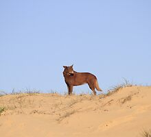 Red Dog by Noel Elliot
