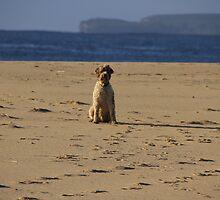 Dogwatch by Noel Elliot