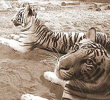 White Tigers by sambk