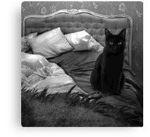Cat BW Canvas Print