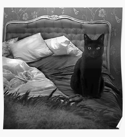 Cat BW Poster
