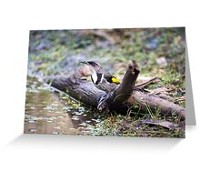 Crescent Honey Eater Greeting Card